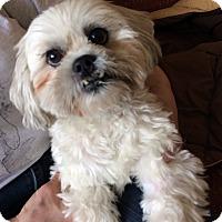 Adopt A Pet :: Dusty - Toronto, ON
