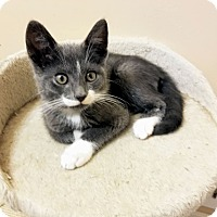Adopt A Pet :: Forest - East Brunswick, NJ