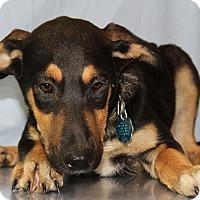 Adopt A Pet :: Jacob - Waldorf, MD