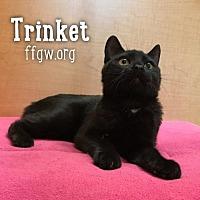Adopt A Pet :: Trinket - Merrifield, VA
