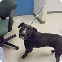 American Bulldog Mix Dog for adoption in Gulfport, Mississippi - Kennedy