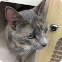 Adopt A Pet :: Sophie - Monroe, NY