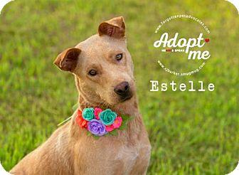 Labrador Retriever/Australian Cattle Dog Mix Dog for adoption in Pearland, Texas - Estelle
