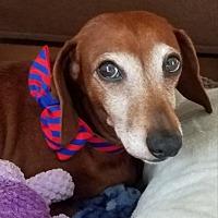 Adopt A Pet :: River - Decatur, GA