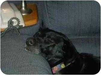Labrador Retriever Mix Dog for adoption in Curran, Ontario - Mon Ami