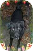 Retriever (Unknown Type) Mix Dog for adoption in Foster, Rhode Island - Pooky (REDUCED FEE)