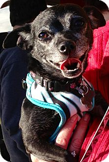 Chihuahua Mix Dog for adoption in San Diego, California - Daisy