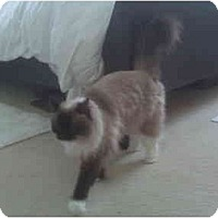 Adopt A Pet :: Roxy - Beverly Hills, CA