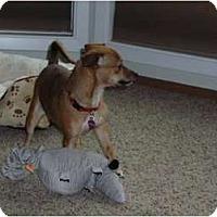 Adopt A Pet :: Mindy - Victor, MT