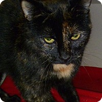Adopt A Pet :: Monica - Hamburg, NY