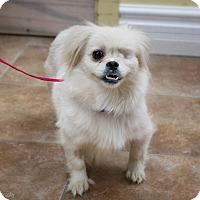 Adopt A Pet :: Miley - Rigaud, QC