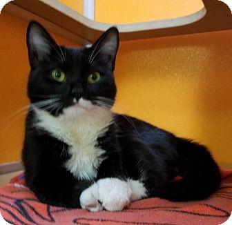 Domestic Shorthair Cat for adoption in Elyria, Ohio - Ruby