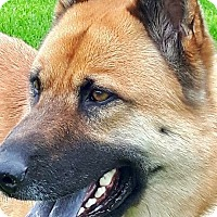 Adopt A Pet :: Miko - Peterborough, ON