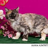 Adopt A Pet :: ASPEN - Reno, NV