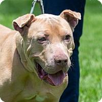 Adopt A Pet :: BOSS - Fernandina Beach, FL