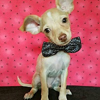 Adopt A Pet :: Daniel - Troutville, VA