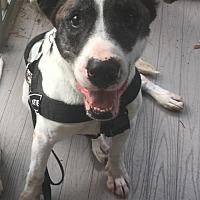 Adopt A Pet :: Herbie - Mount Laurel, NJ