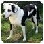 Photo 2 - Labrador Retriever Mix Dog for adoption in Englewood, Florida - Oreo