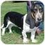 Photo 2 - Basset Hound Mix Dog for adoption in North Judson, Indiana - Jonah
