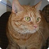 Adopt A Pet :: Minnie - Frederick, MD