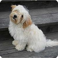 Adopt A Pet :: Sushi - Rigaud, QC