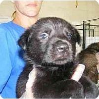 Adopt A Pet :: Butters - Alexandria, VA
