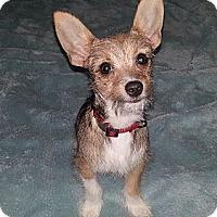 Adopt A Pet :: Gunner - Kingwood, TX