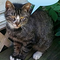 Adopt A Pet :: Scotty - Salisbury, NC