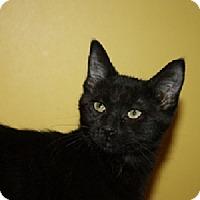 Adopt A Pet :: Deacon (LE) - Little Falls, NJ