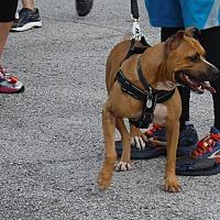 Adopt A Pet :: Ellie - Malabar, FL