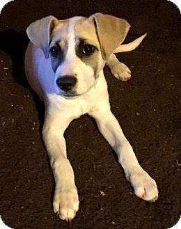 Terrier (Unknown Type, Medium) Mix Puppy for adoption in Seattle, Washington - Onna