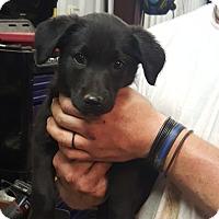 Adopt A Pet :: Bonnie - South Dennis, MA