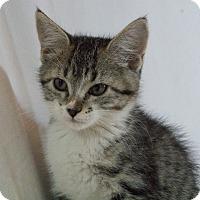 Adopt A Pet :: Cuatro - Denver, CO