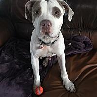 Adopt A Pet :: Mellie - Rancho Santa Fe, CA