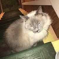 Adopt A Pet :: Kat - Naugatuck, CT