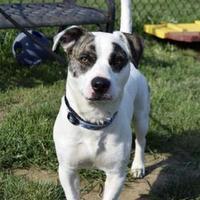 Adopt A Pet :: Ziggy - Philadelphia, PA