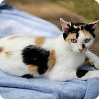 Adopt A Pet :: GAIA - Franklin, TN