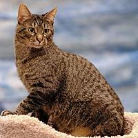 Adopt A Pet :: Tito C1907 - Shakopee, MN