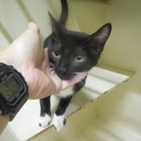 Adopt A Pet :: Barney - Morgan Hill, CA