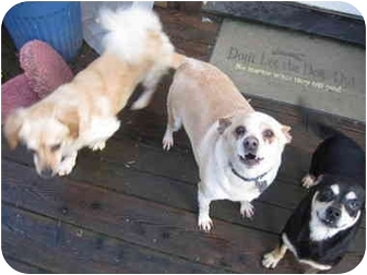 Boston Terrier/Terrier (Unknown Type, Small) Mix Dog for adoption in Grants Pass, Oregon - Snoopy