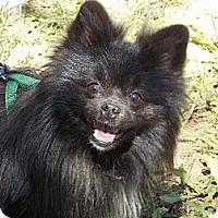 Adopt A Pet :: STEELE - Hesperus, CO