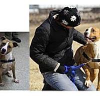 Adopt A Pet :: Lucy (Courtesy list) - Burr Ridge, IL
