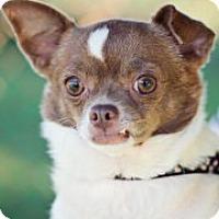 Adopt A Pet :: Monkey - Mt Gretna, PA