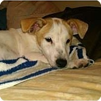Adopt A Pet :: JOHNNY - Malibu, CA