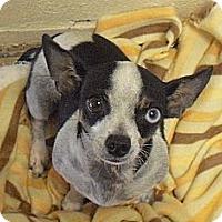 Adopt A Pet :: Lola - Wickenburg, AZ