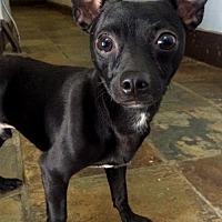 Adopt A Pet :: Ringo - Staten Island, NY