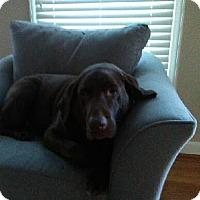 Adopt A Pet :: Jaxx - Purcellville, VA