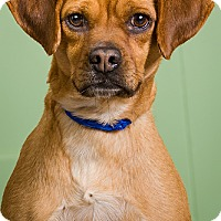 Adopt A Pet :: Jade - Owensboro, KY
