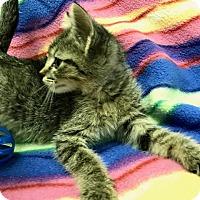 Adopt A Pet :: Clove - Jackson, TN