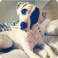 Adopt A Pet :: Lucy - Warren, MI